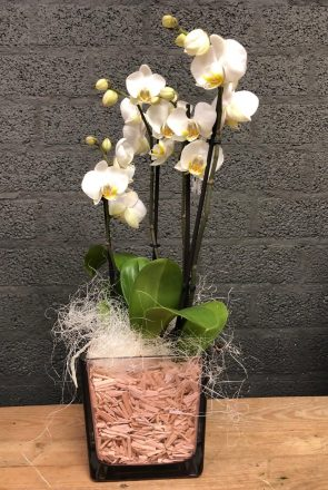 Kwaliteits orchidee in glasvaas wit
